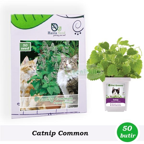 Benih-Bibit Herbs Catnip Common (Haira Seed)