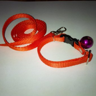 Collar/Kalung uk S + Leash Orange untuk Kucing, Kelinci, Musang,Puppy Small breed