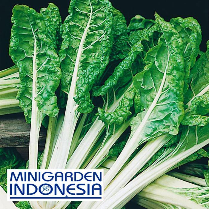 20 Benih Sawi Chard White Silver 2 F1 Mr Fothergills bibit tanaman sayur sayuran hidroponik