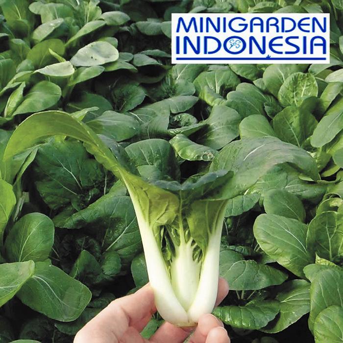 500 Benih Sawi Caisim Glory bibit tanaman sayuran hidroponik