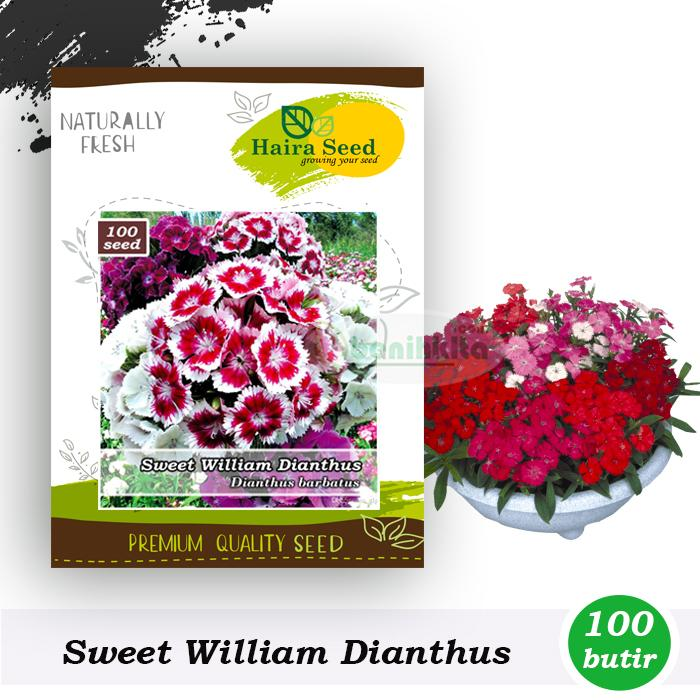 Benih-Bibit Bunga Sweet William Dianthus (Haira Seed)