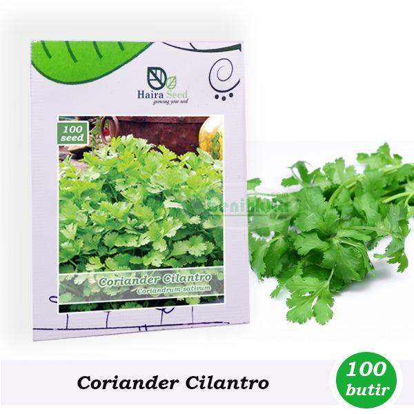 Benih-Bibit Cilantro-Ketumbar (Haira Seed)