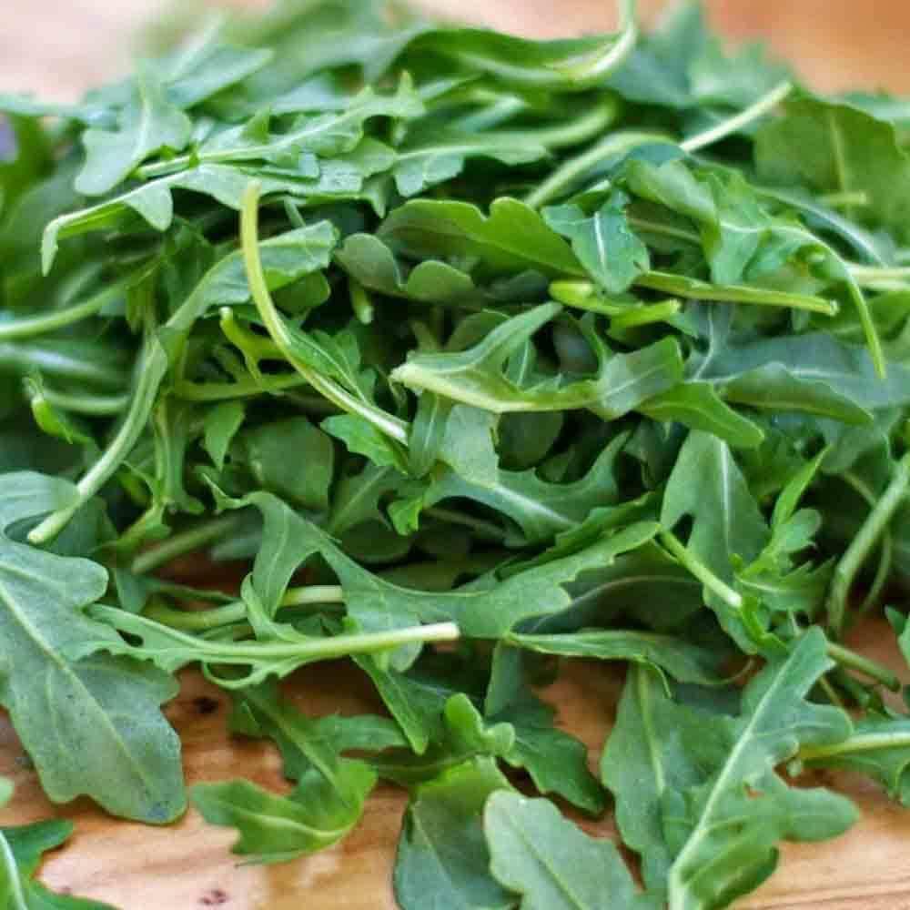 Kelebihan Bibit Benih Seeds Herb Rouquette Arugula For Salad And Herbs Catnip Common Haira Seed Sandwich 4