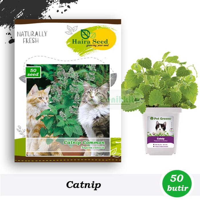 Benih-Bibit Herbs Catnip Common (Haira Seed)