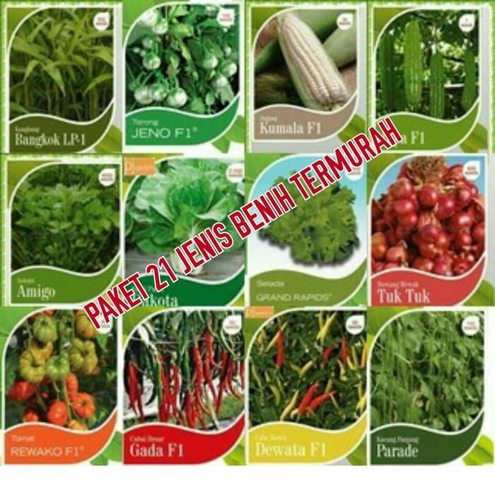 150 Benih Selada merah Red Rapid F1 bibit tanaman sayur sayuran hidroponik cocok u lalap. Source · benih/bibit sayuran