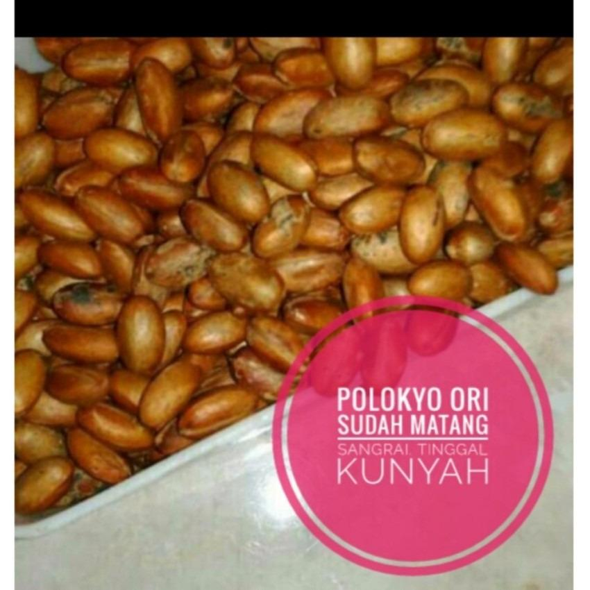 Toko Best Seller Kacang Pelangsing Polokyo Biji Ada Kulitnya Anti Cancel Pasti Kirim Polokyo