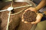 ... Kopi Largo Specialty Coffee Robusta Lampung 100gr - 4 ...