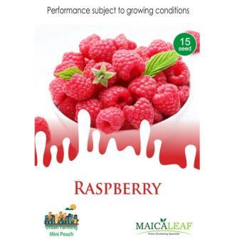 Maica Leaf Buah Raspberry Benih Tanaman [15 Benih]