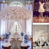 ... 50 Buah Grosir Bulu Burung Unta untuk Dekorasi Pernikahan - 3 ...