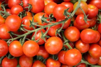 Jual Signstek Stainless Steel alat untuk mengikat tanaman untuk Source · Bolehdeals 100 Buah Berkebun Okulasi Gunting Untuk Tanaman Sayur