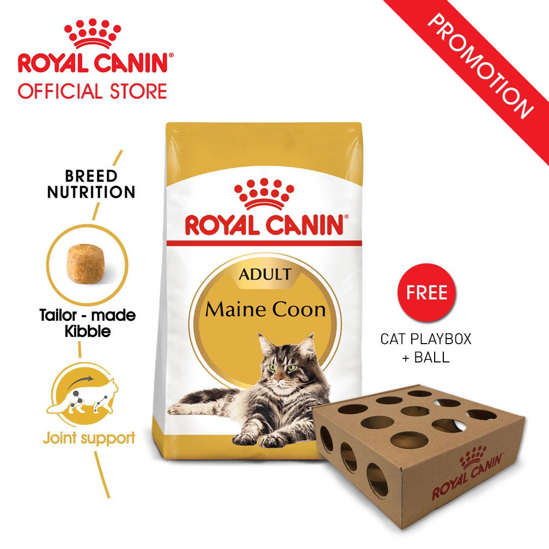 Royal Canin Adult Maine Coon Makanan Kucing Dewasa Dry 2kg FREE Cat Playbox