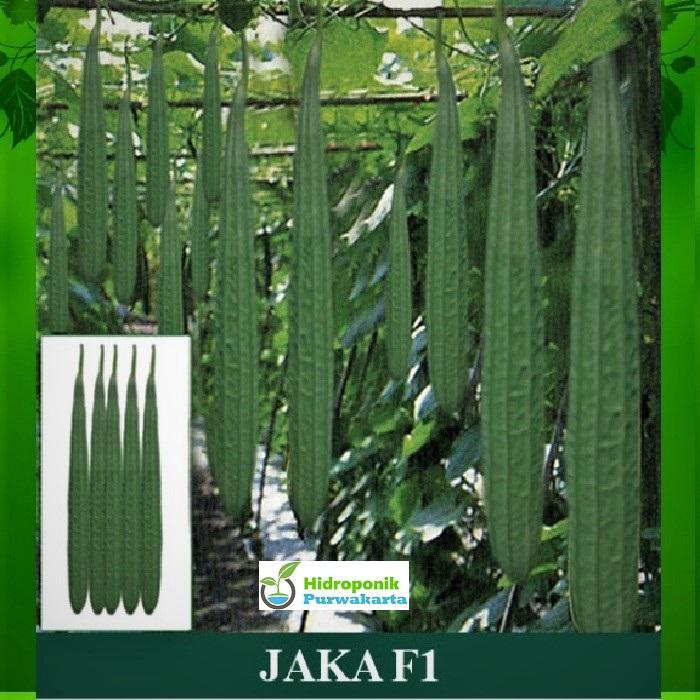 benih timun hibrida warna hijau isi 200 butir tahan virus calia f1 original packing mutiara bumi