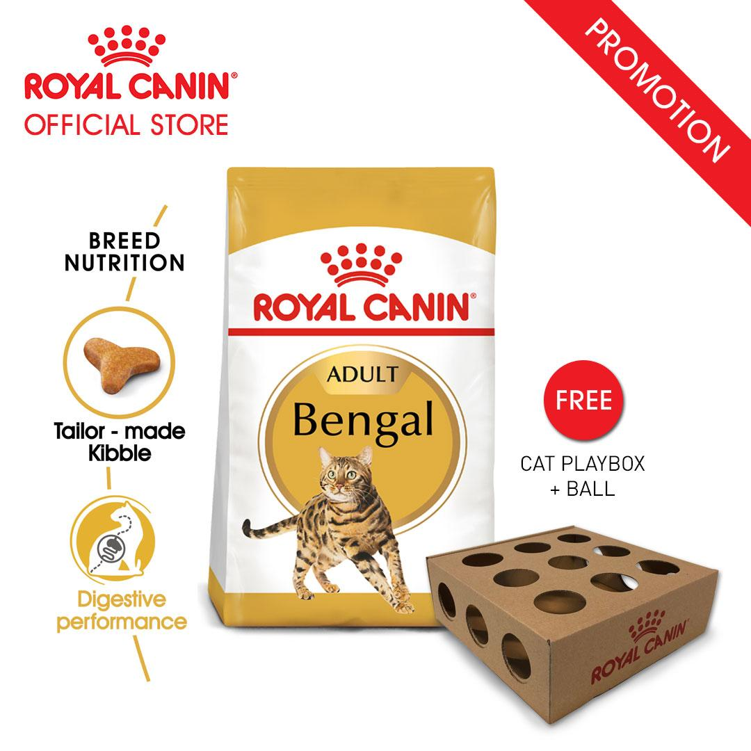 Royal Canin Adult Bengal Makanan Kucing Dewasa Dry 2kg FREE Cat Playbox