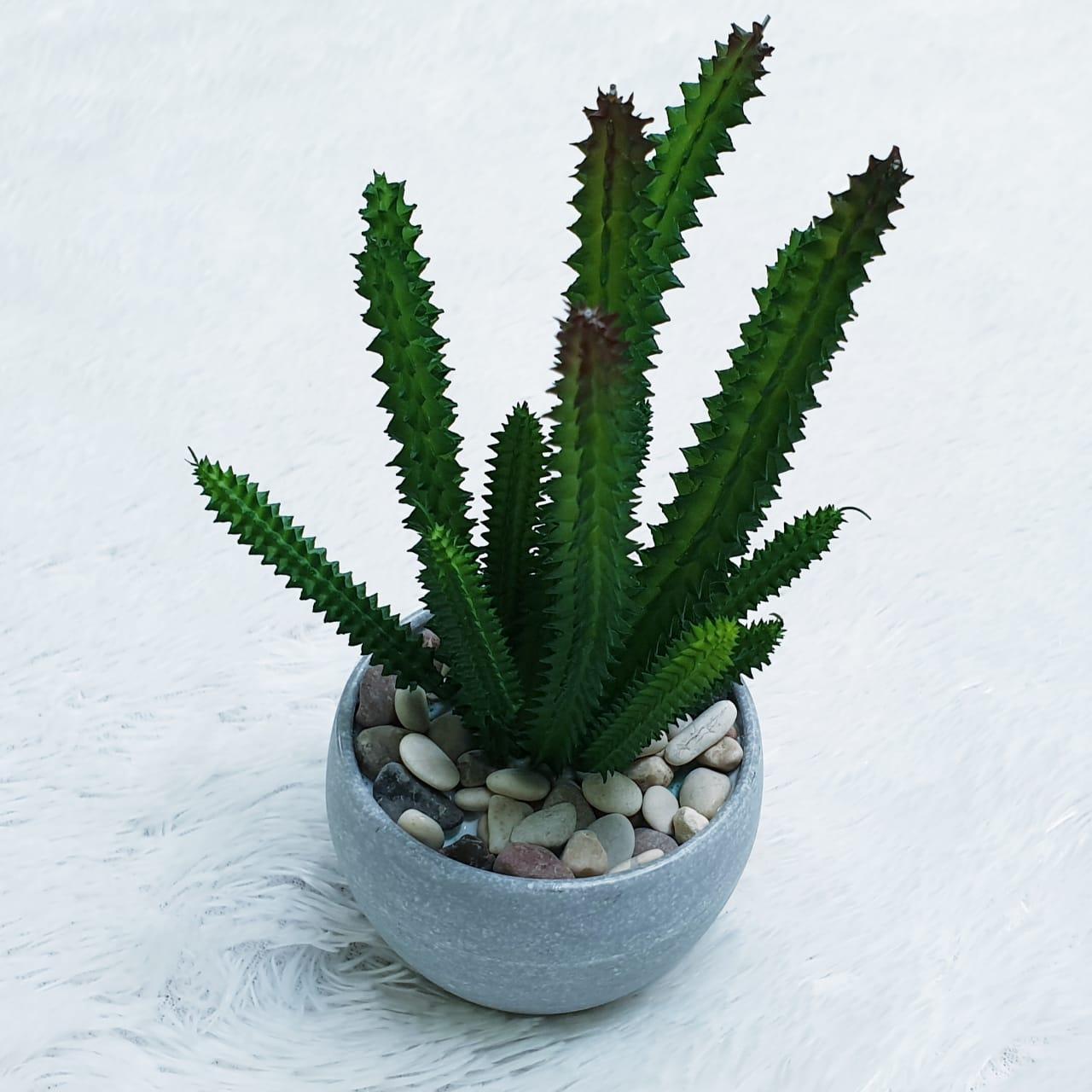 ... Hiasan Meja - Tanaman Hias - Bunga Pajangan - Bunga Artificial - Mini  Kaktus Pot Kecil 908d007201