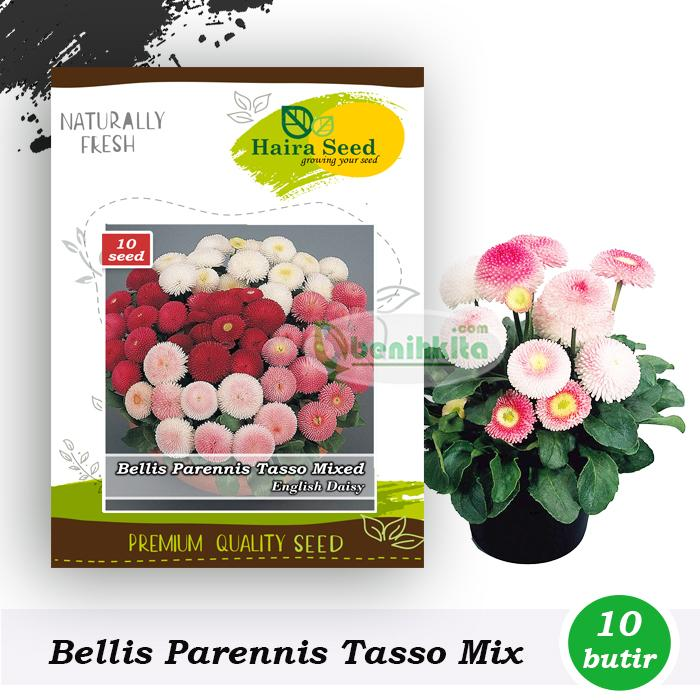 Benih-Bibit Bunga English Daisy Bellis Tasso Mix (Haira Seed)
