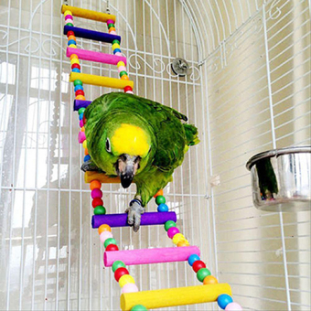 Harga Bluelans Multicolor Ladder Bridge Budgie Parrot Climbing Bite Toy Parakeet Swing Bird Toy 31cm/12.2inch - intl
