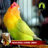... Top Fighter Lovebird Sempati Pakan Lomba Burung Lovebird Juara Rajin Ngekek Konslet Gacor - 3 ...