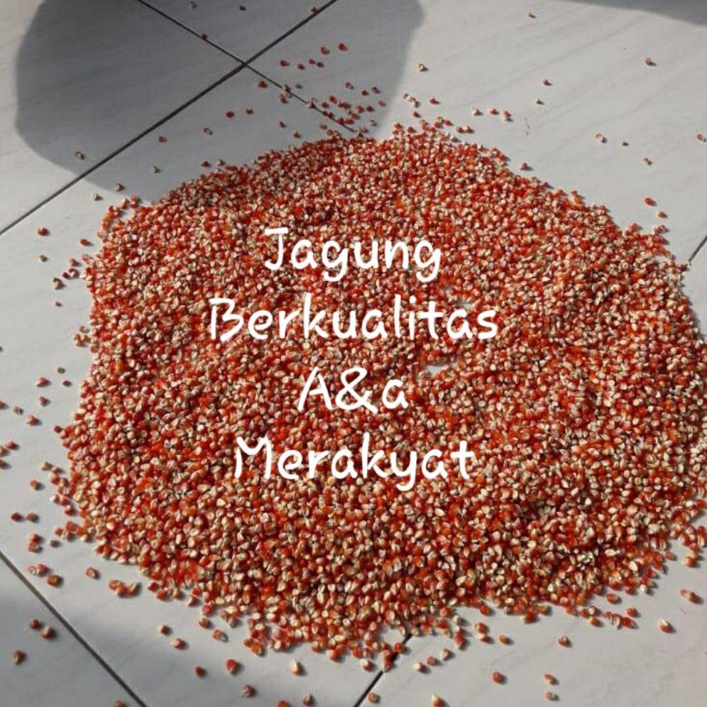 jagung kristal pakan burung berkualitas tinggi 1kg
