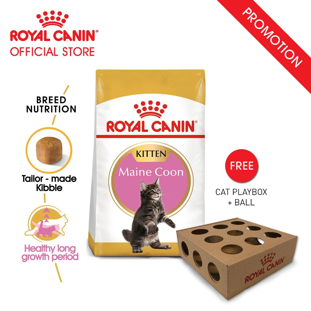Royal Canin Kitten Maine Coon Makanan Anak Kucing Dry 2kg FREE Cat Playbox