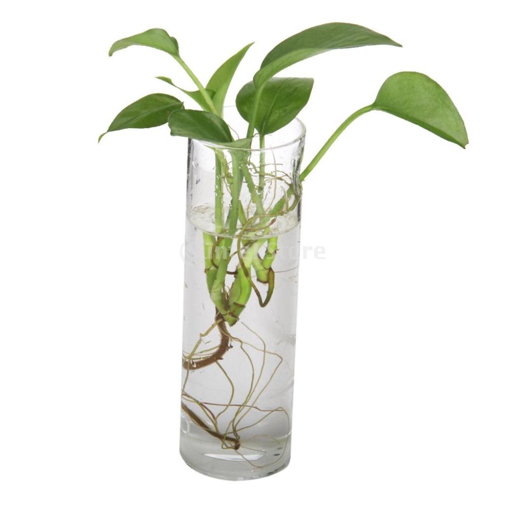 Bolehdeals Silinder Jelas Wall Hanging Botol Kaca Untuk Vas Bunga Dekorasi Tanaman - Daftar Update Harga
